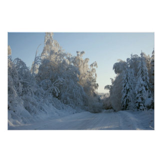 Snow covered trees posters