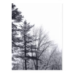 Snow-covered Trees: Vertical Postcard
