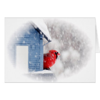 Snow Day Cardinal - Bird Card