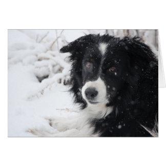 Snow Dog Card