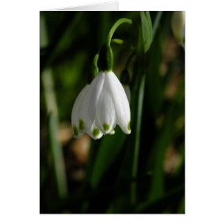 Snow Drop Flower Card