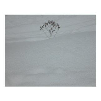 Snow everywhere photo print