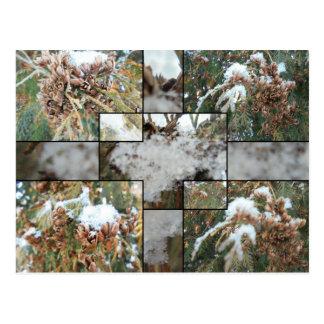 Snow everywhere postcard