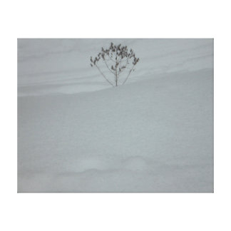 Snow everywhere stretched canvas prints