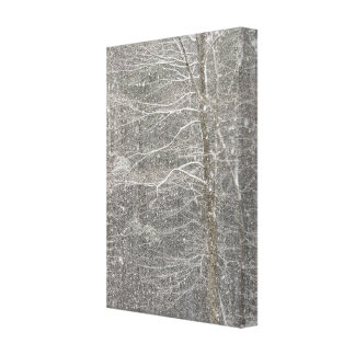 Snow Falling Canvas Prints