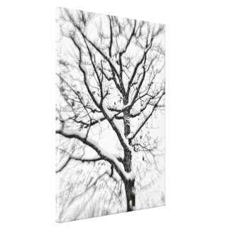 Snow Filled Tree Stretched Canvas Prints