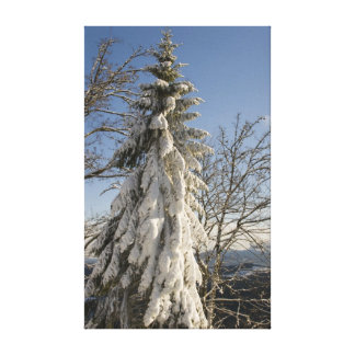 Snow fir canvas print