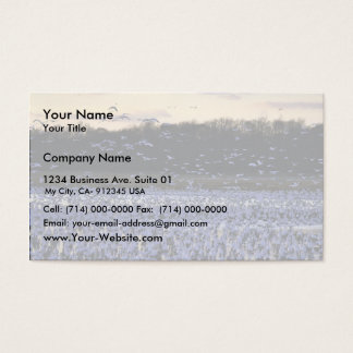 Snow geese business card