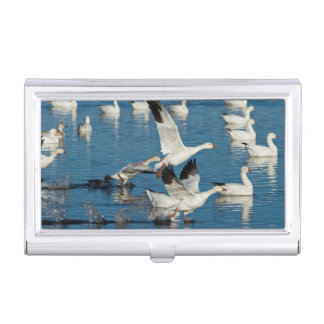 Snow Geese (Chen Caerulescens) Taking Off Business Card Cases