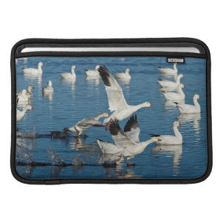 Snow Geese (Chen Caerulescens) Taking Off MacBook Sleeve