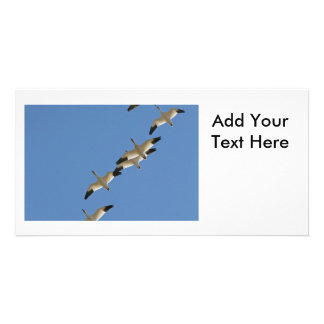 Snow Geese Flying South for the Winter Picture Card