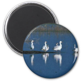 Snow Geese Magnet