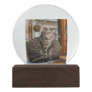 Snow Globe with Two Cats Image Snow Globes
