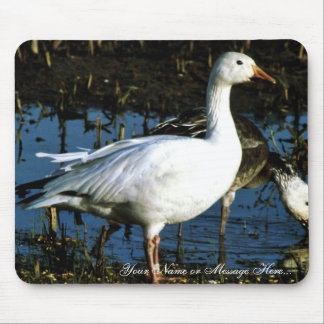 Snow Goose Mouse Pads