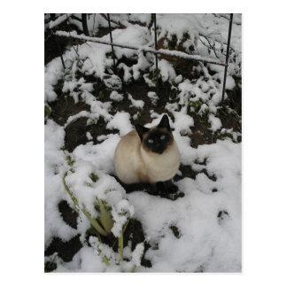 Snow Images, Snow Cat Postcard