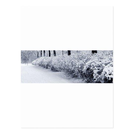 Snow in Sweden Postcard