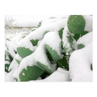 Snow in the Desert Postcard