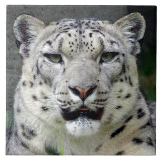 snow-leopard10x10 tile