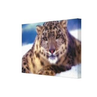 Snow Leopard 2 Canvas Prints