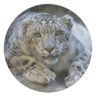 Snow leopard as plates