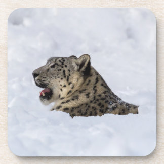 Snow Leopard Buried in Snow Drink Coasters