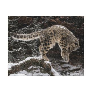 Snow Leopard Cub Pounce Stretched Canvas Prints