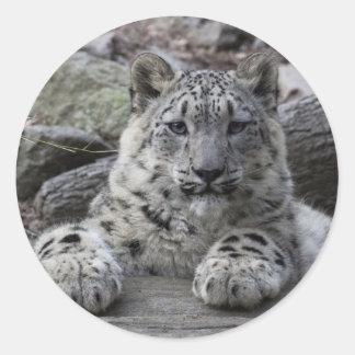 Snow Leopard Cub Sitting Classic Round Sticker