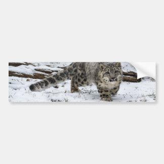 Snow Leopard Cub Stalking Birds Bumper Sticker