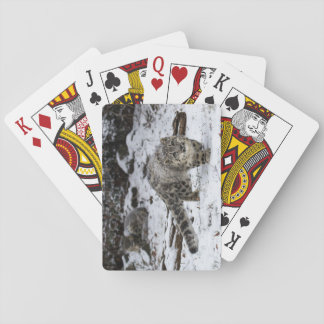 Snow Leopard Cub Stalking Birds Playing Cards