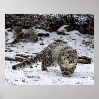 Snow Leopard Cub Stalking Birds Print