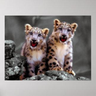 Snow Leopard Cubs Poster