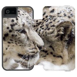 Snow Leopard Cuddle Incipio Watson™ iPhone 5 Wallet Case