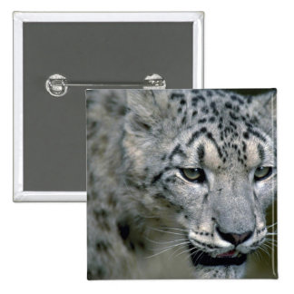 Snow leopard head shot pinback button