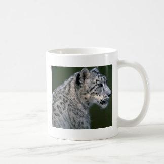 Snow leopard, head shot mug