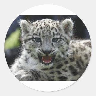 Snow Leopard Kitten Round Sticker