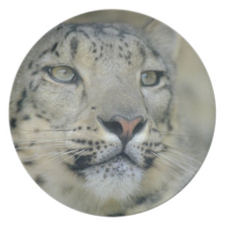 snow leopard plate