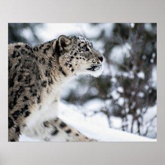Snow Leopard Profile Poster