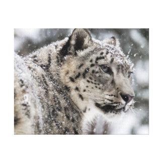 Snow Leopard Snow Portrait Canvas Prints