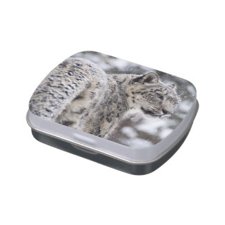 Snow Leopard Stands in the Snow Jelly Belly Candy Tin