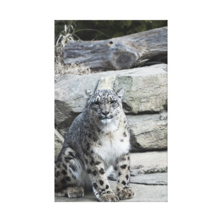 Snow Leopard Stretched Canvas Print