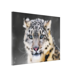 Snow Leopard Stretched Canvas Prints