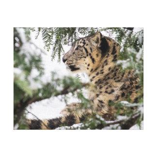 Snow Leopard Under Snowy Bush Canvas Print