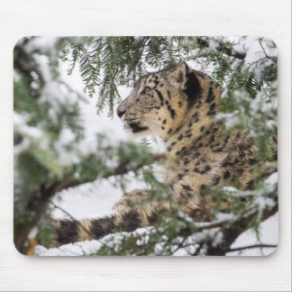 Snow Leopard Under Snowy Bush Mouse Pad