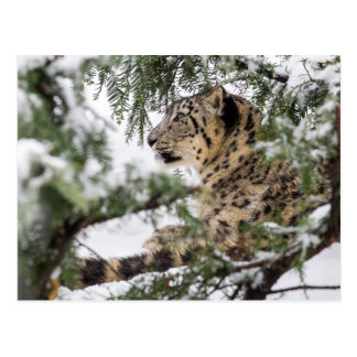 Snow Leopard Under Snowy Bush Postcard