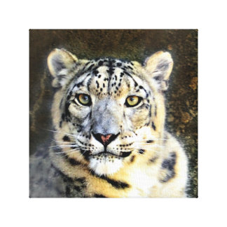 Snow Leopard Wrapped Canvas