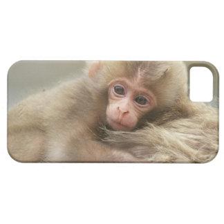 Snow Monkey Baby, Jigokudani, Nagano, Japan 2 Case For The iPhone 5