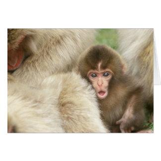 Snow Monkey Baby, Jigokudani, Nagano, Japan Card