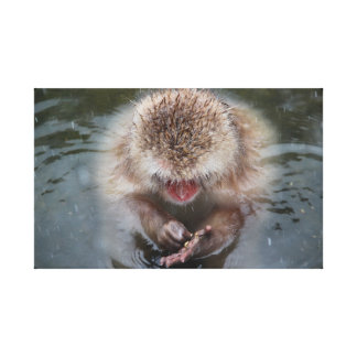 Snow Monkey in Japan Hot Springs Stretched Canvas Print