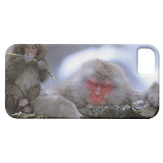 Snow Monkey Mother & Child, Jigokudani, Nagano, iPhone 5 Cover
