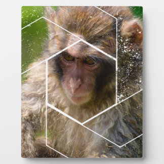 Snow Monkey Plaque